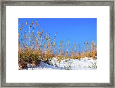 Sand Dunes And Sea Oats Framed Print