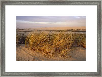 Sand Dunes At Oso Flaco Nature Framed Print by Rich Reid