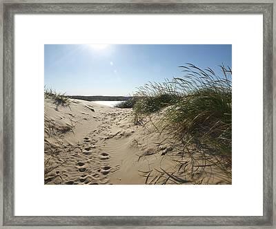 Framed Print featuring the photograph Sand Tracks by Tara Lynn