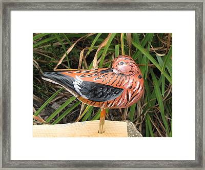 Sanderling Back Framed Print