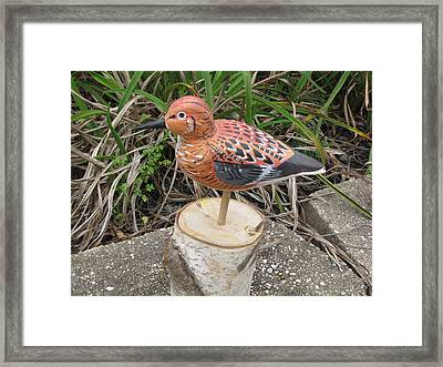Sanderling Foward 3 Framed Print