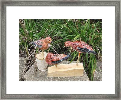 Sanderling Trio Framed Print