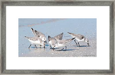 Framed Print featuring the photograph Sanderlings by Nature and Wildlife Photography