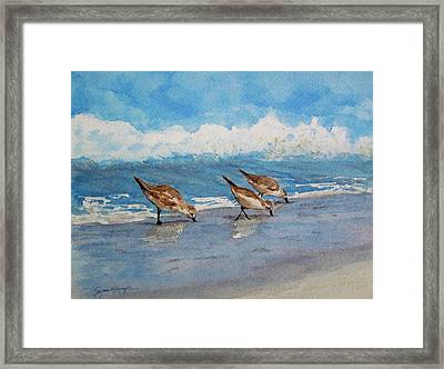 Sanderlings Framed Print