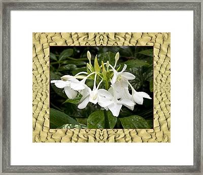 Sandflow Lilies Framed Print by Bell And Todd