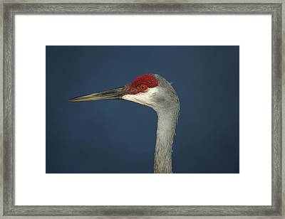 Sandhill Blues Framed Print