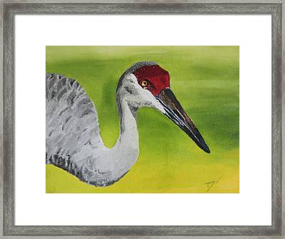 Sandhill Crane Framed Print by D Turner