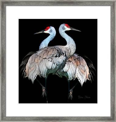 Sandhill Crane Mirror Image Framed Print