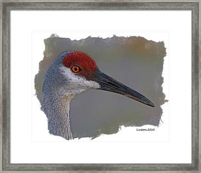 Sandhill Crane Portrait Framed Print