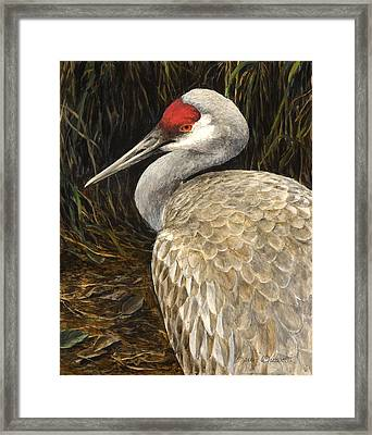 Framed Print featuring the painting Sandhill Crane - Realistic Bird Wildlife Art by Karen Whitworth
