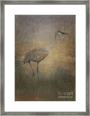 Sandhill Crane Watercolor Framed Print