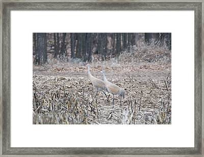 Framed Print featuring the photograph Sandhill Cranes 1171 by Michael Peychich