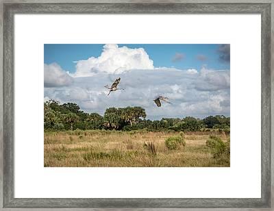 Sandhill Cranes Fly Framed Print