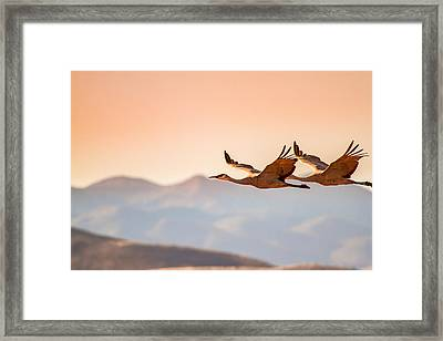 Sandhill Cranes Flying Over New Mexico Mountains - Bosque Del Apache, New Mexico Framed Print by Ellie Teramoto
