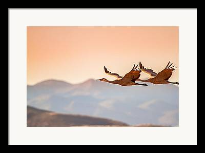 Flying Geese Framed Prints