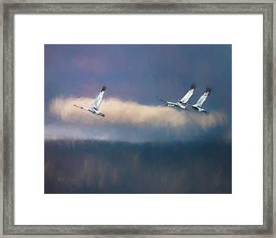 Sandhill Cranes II Framed Print