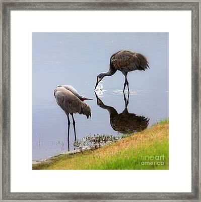 Sandhill Cranes Reflection On Pond Framed Print