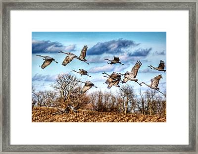 Framed Print featuring the photograph Sandhill Cranes by Sumoflam Photography