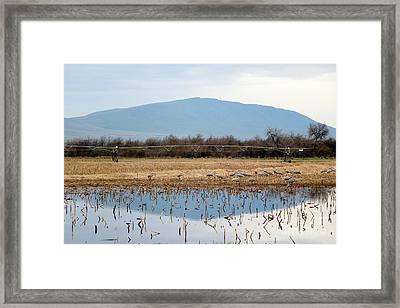 Sandhill Cranes With Natural Vignette Framed Print