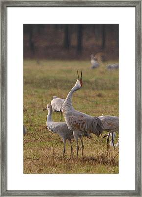 Framed Print featuring the photograph Sandhill Delight by Shari Jardina