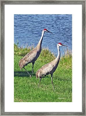 Sandhill Pair Framed Print