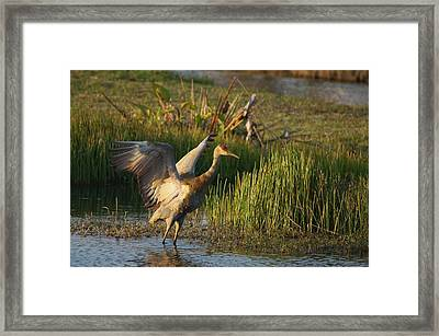 Framed Print featuring the photograph Sandhill Stretches by Lynda Dawson-Youngclaus