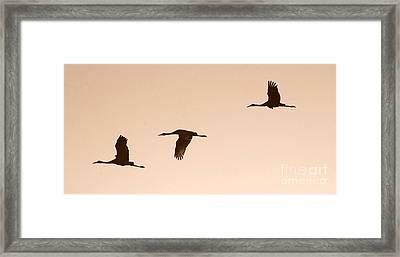 Sandhills In Flight In Sepia Framed Print by Carol Groenen