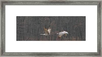 Framed Print featuring the photograph Sandhills In Flight by Shari Jardina