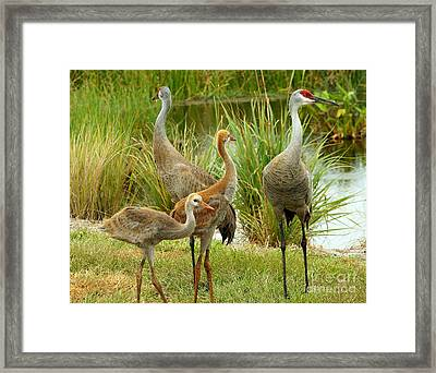 Sandhill Cranes On Alert Framed Print