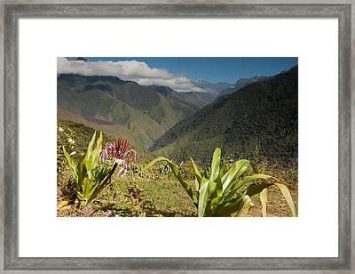 Sandillani Gardens And Cloudforest Framed Print