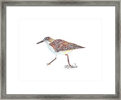 Sandpiper Bird Framed Print