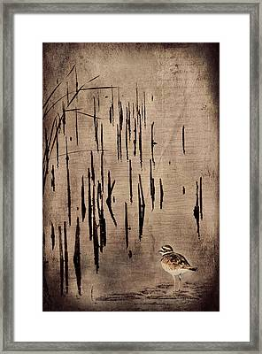 Sandpiper By The Lake Framed Print
