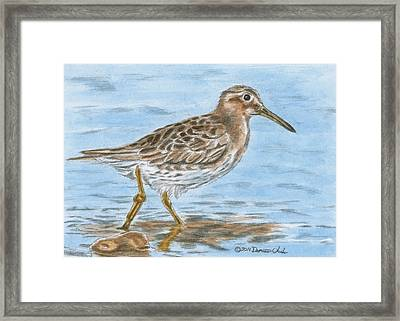 Sandpiper Framed Print by Dominic White