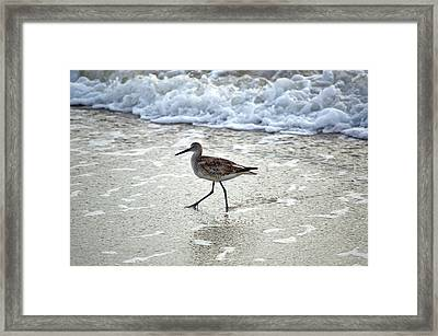 Sandpiper Escaping The Waves Framed Print