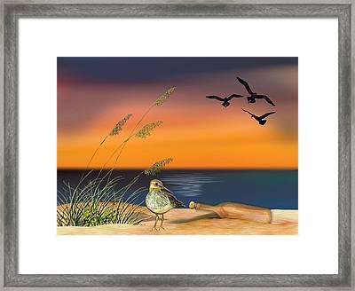 Sandpiper For Angel Framed Print