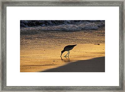 Sandpiper In Evening Framed Print