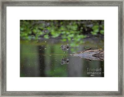Sandpiper In The Smokies Framed Print by Douglas Stucky