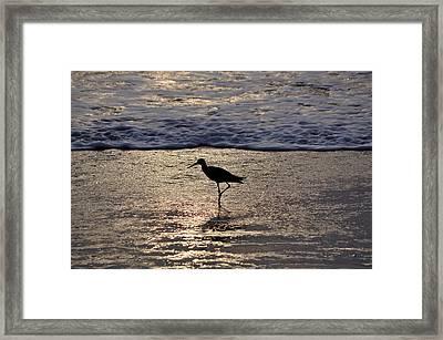 Sandpiper On A Golden Beach Framed Print