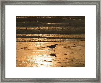 Framed Print featuring the photograph Sandpiper by Peg Urban