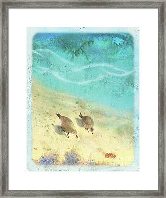 Sandpiper Summer Framed Print by Tracy Herrmann