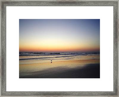 Sandpiper Sunrise Framed Print