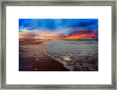 Sandpiper Sunrise Framed Print by Betsy Knapp