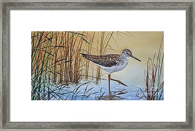 Sandpiper's Bright Shore Framed Print by James Williamson