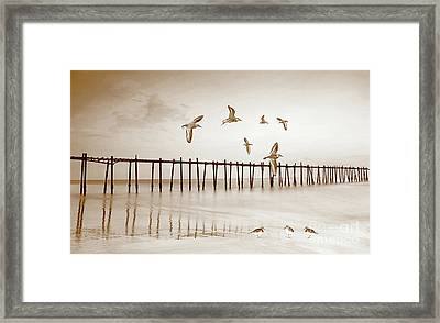 Sandpipers In Sepia Framed Print