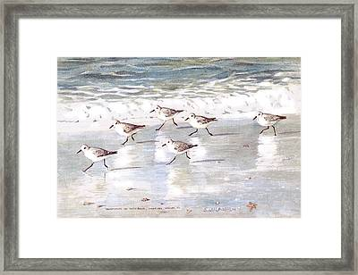Sandpipers On Siesta Key Framed Print by Shawn McLoughlin