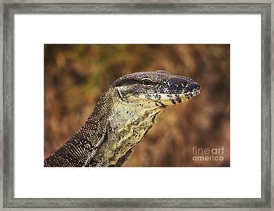 Sandy Goanna Framed Print by Jorgo Photography - Wall Art Gallery