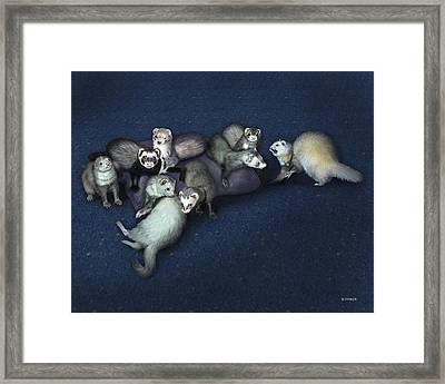 Sandy's Ferrets Framed Print