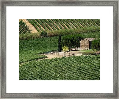 Sangiovese Vineyard Framed Print