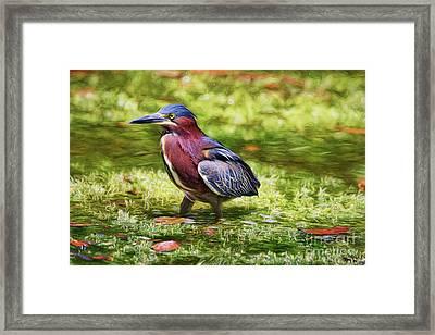 Sanibel Green Heron Framed Print