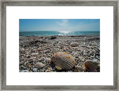 Sanibel Island Sea Shell Fort Myers Florida Framed Print